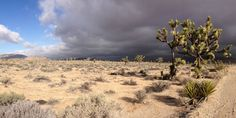 Here is my one-day highlights tour for Joshua Tree National Park, get an early start because we have a lot to see!