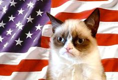 The Official Grumpy Cat™ Tumblr : Photo