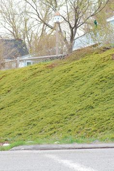 Tough Slope? Junipers Are Up to Task: Do You Live on a Steep Hill? Creeping Juniper Can Tame It
