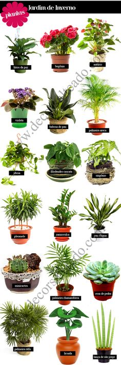 Jardim de Inverno - Veja modelos, dicas e sugestões para qual planta usar! Patio Plants, Garden Plants, Indoor Plants, Indoor Garden, Outdoor Gardens, Le Hangar, Decoration Plante, Winter Garden, Plant Decor