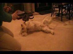 Lucy's tricks - YouTube