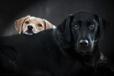Riley and Sadie tender moment by Gord Rufh on 500px Look into my eyes Gord Rufh -Dog Photography In Victoria BC Gord Rufh - Dog Photographer in Victoria BC