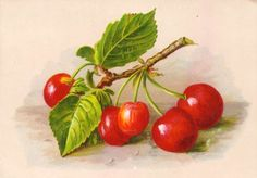 cherries to collage