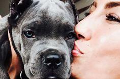 Cane Corso Ünlü baterist Tayfun Tekeli, Çağla Şikel  ve  daha birçok ünlü ismi Cano Corso cinsi köpek sahibi yapan İbrahim Bozkurt, ünlü isimlerin neden en çok bu cinsi tercih ettiklerini açıkladı.