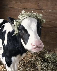 Discover & share this Cow GIF with everyone you know. GIPHY is how you search, share, discover, and create GIFs. Farm Animals, Funny Animals, Cute Animals, Anim Gif, Little Critter, Brighten Your Day, My Best Friend, Cute Puppies, Animal Pictures