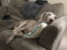 Our tired girl blends in with the couch http://ift.tt/2iCNhVv