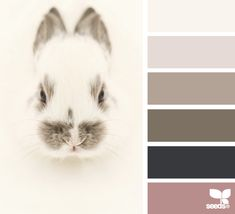 Palette inspired by bunny tones Hue Color, Colour Pallette, Color Palate, Colour Schemes, Color Patterns, Color Combos, Deco Originale, Design Seeds, World Of Color