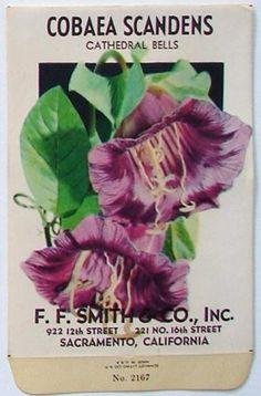 F. F. Smith, Cobaea Scandens, 2167, Vintage Seed Packet