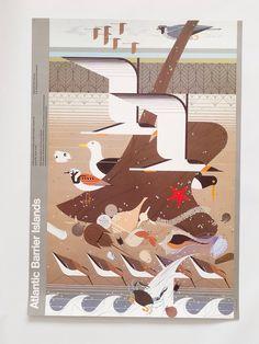 Aves Marinas Orilla de Playa Costa Vintage Charley Harper