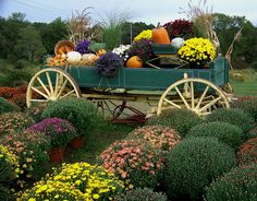 Meadow View Farm has placed its Harvest Wagon out on display among the Mums. Harvest Season, Fall Harvest, Fall Yard Decor, Fall Decorations, Country Christmas Decorations, Garden Wagon, Landscaping With Roses, Fall Flower Arrangements, Outdoor Garden Decor