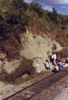 Vista parcial do Sítio Jaguariaíva (Ramal Ferroviário Jaguariaíva-Arapoti, km 4,3). Mostra dos folhelhos sílticos de coloração cinza. Bolzon,R.T.; Azevedo,I.; Assine,M.L. 1999. Sítio Jaguariaíva, Estado do Paraná. In: Schobbenhaus,C.; Campos,D.A.; Queiroz,E.T.; Winge,M.; Berbert-Born,M. (Edit.) Sítios Geológicos e Paleontológicos do Brasil. Publicado na Internet em 27/12/1999 no endereço http://www.unb.br/ig/sigep/sitio065/sitio065.htm