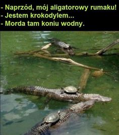 "The Turtle Calvary: Onward alligator steed! ""I'm a crocodile"" Silence, water horse! Very Funny Memes, Wtf Funny, Funny Cute, Friend Zone, Funny Photos, Funny Images, Eddsworld Memes, Best Memes Ever, Funny Mems"