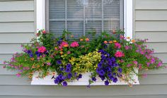 Image result for spring window boxes