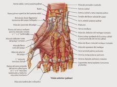 Dolor de manos en fibromialgia Un dolor que no se entiende y que se intenta justificar con otras enfermedades, una búsqueda que hace el paciente cuando los síntomas y desencadenantes del dolor en f…