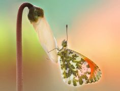 light & colors by mauro maione Butterfly Images, Flying Insects, Photo Lighting, Great Shots, Light Colors, Nature Photography, Flora, Pictures, Animals