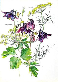 Vintage Botanical Print - Columbine and Fennel Rescued from a book of flowers and Shakespeares sonnets and writings is this wonder illustration of Columbine and Fennel. Vivid colors and gorgeous details, this book plate is approximately 8.5 x 6. (21.59 x 15.24 cm) The page shows some tanning and very minor age spots but otherwise in great condition! Text on the back of the page. Original 1969 print - not a copy. Bring the great outdoors inside with a vintage botanical print! This pr...