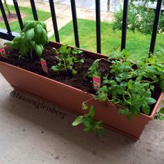 HOW TO PLANT YOUR OWN CONTAINER HERB GARDEN - perfect for small spaces