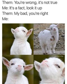 I'll be just as defiant & smug as this sassy ass lil goat  just say I was right @dabmoms @dabmoms