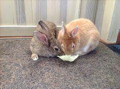 Winny & Redly eten samen een blaadje sla