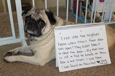 Break And Enter Pug