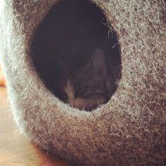 So comfy#cat #cats #TagsForLikes #catsagram #catstagram #instagood #kitten #kitty #kittens #pet #pets #animal #animals #petstagram #petsagram #photooftheday #catsofinstagram #ilovemycat #instagramcats #nature #catoftheday #lovecats #furry #sleeping #lovekittens #adorable #catlover #instacat #catfurniture #katze