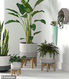 House Plants Decor, Plant Decor, Small Outdoor Spaces, Floor Plants, Diy Plant Stand, Colorful Plants, Snake Plant, Potted Plants, Indoor Tree Plants