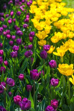 29 Best Purple And Yellow Images Beautiful Flowers Purple Flowers