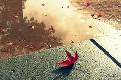 Nature morte au sol by Rayparňova, via Flickr