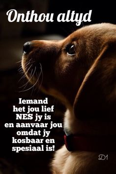 Iemand het jou lief nes jy is en aanvaar jou omdat jy kosbaar en spesiaal is! Wisdom Quotes, Qoutes, Cute Quotes, Funny Quotes, Teddy Beer, Baby Boy Knitting Patterns, Afrikaanse Quotes, Morning Prayers, Good Night Quotes