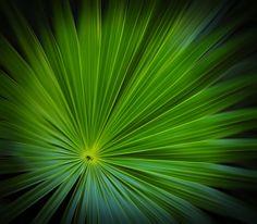 Burst Of Green   by Esteban Rios