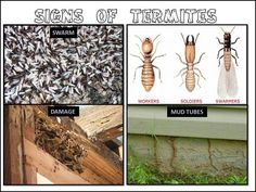 Termite Protection: Taking Care of Your Home