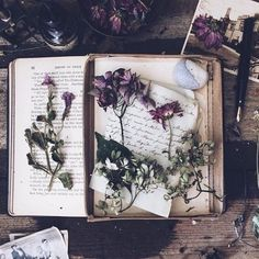 Image discovered by Manuela Micu. Find images and videos about vintage, aesthetic and flowers on We Heart It - the app to get lost in what you love. Witch Craft, Witch Aesthetic, Book Aesthetic, Book Of Shadows, Samhain, Wiccan, Wicca Witchcraft, Drawing Flowers, Painting Flowers