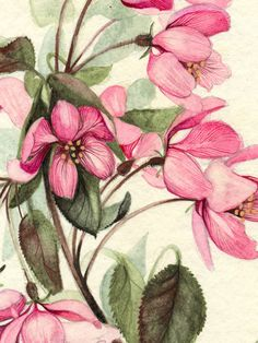 Watercolor Botanical Illustration. Flowers. Part II on the Pantone Canvas Gallery