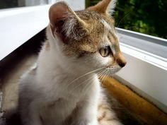 Curious little cat