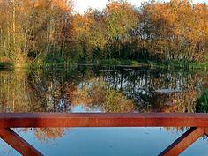 Visvijver Emmer-compascuum,Drenthe,Netherlands picture 2