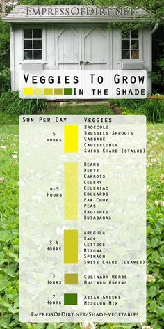 Veggies to grow in the shade. Lots of options including broccoli, spinach, kale, carrots, and more!