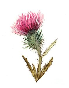 Shop for thistle art from the world's greatest living artists. All thistle artwork ships within 48 hours and includes a money-back guarantee. Choose your favorite thistle designs and purchase them as wall art, home decor, phone cases, tote bags, and more! Watercolor And Ink, Watercolor Flowers, Watercolor Paintings, Drawing Flowers, Art Floral, Scotland Tattoo, Hand Drawn Flowers, Paintings For Sale, Fine Art America