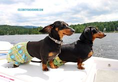 The 26 Most Wiener Dog Things To Ever Happen In The History Of Wiener Dogs