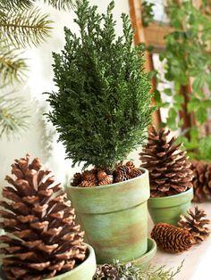 tannenzapfen dekorieren ideen blumentöpfe mini tannenbaum