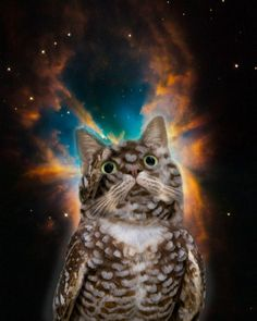 "trippy space cat/owl sez "" DO NOT DRINK THE PURPLE LEAN!"" ........ hahahahah"