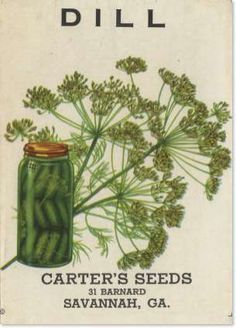 Dill seed label Carter's seeds