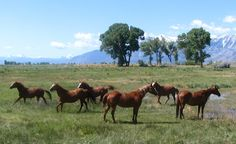 Horse in Carson Valley