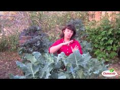 ▶ What to Plant for a Fall Garden - YouTube
