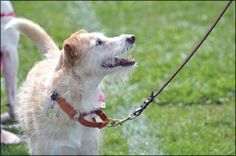 The Importance of a Dog's Name with Regards to Dog Training