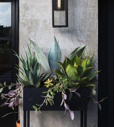 DIY planter box is a simple but effective medium to display your favorite plants. Here are some ideas you can try for your own garden or home. Indoor Vegetable Gardening, Indoor Garden, Container Gardening, Indoor Plants, Outdoor Gardens, Indoor Cactus, Diy Planter Box, Diy Planters, Indoor Planter Box