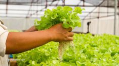 Aquaponics: Is this promising, sustainable farming method the urbanized future of agriculture? Sustainable Farming, Sustainability, Organic Gardening, Gardening Tips, California Drought, Natural News, Aquaponics System, Aquaponics Garden, Grow Your Own Food