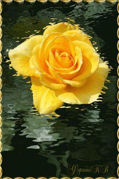 RUMA♥ Rose Animation