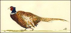 Fat Pheasant watercolor by Juan Bosco
