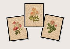 Farmhouse Decor Wall Art Prints, Pink Floral Artwork, Botanical Art Set of 3 Prints