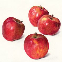 Four Apples - still life drawing by Jean Hands